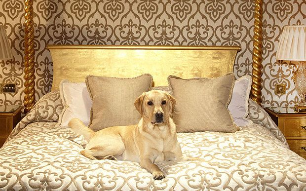 Top 10 Best Pet Friendly Hotels In Britain