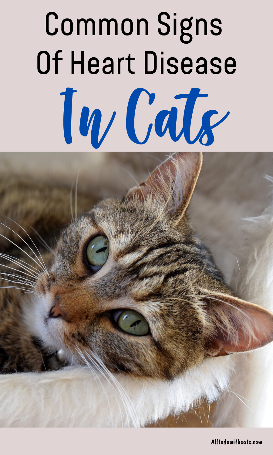 What Are The Symptoms Of Heart Disease In Cats In 2020 Heart Disease Cat Diseases Heart Disease Symptoms