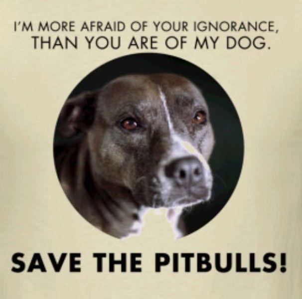 Pitbulls Pitbulls Dogs Pitbull Terrier