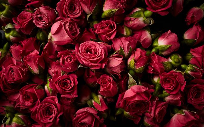 herunterladen hintergrundbild rosa rosen floralen hintergrund rosen knospen der rosen sch ne. Black Bedroom Furniture Sets. Home Design Ideas