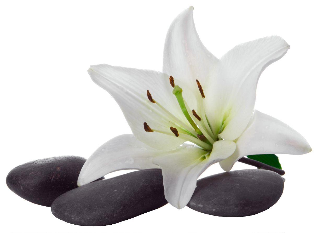 Stickers galet orchid e pas cher d cor nature pinterest - Stickers miroir pas cher ...