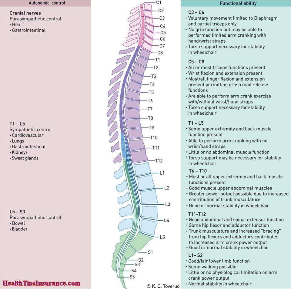 Functions Of Spinal Cord Overview | Health Info | Pinterest | Spinal ...