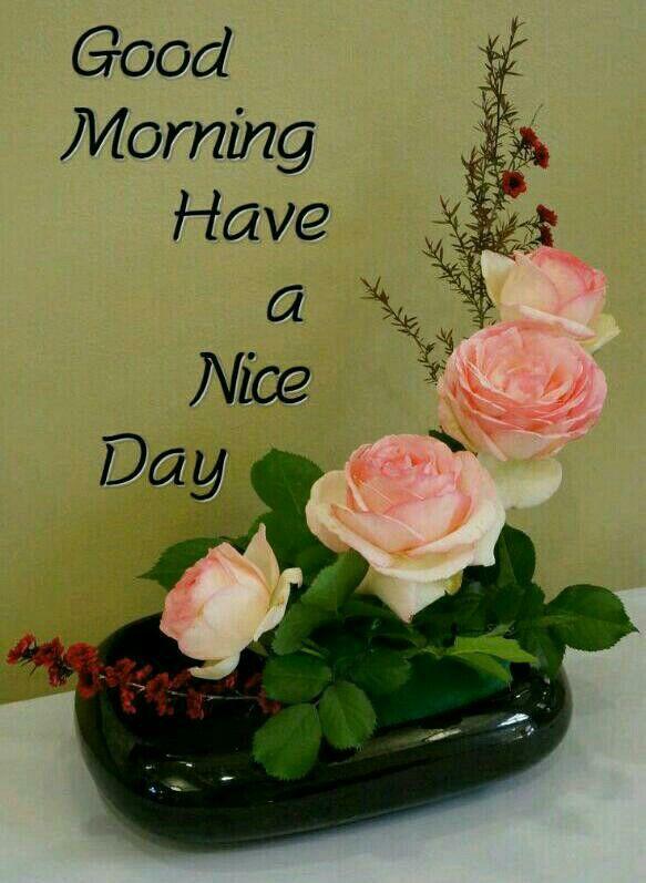 Pin By Gopesh Avasthi On Morning Morning Greeting Good Morning