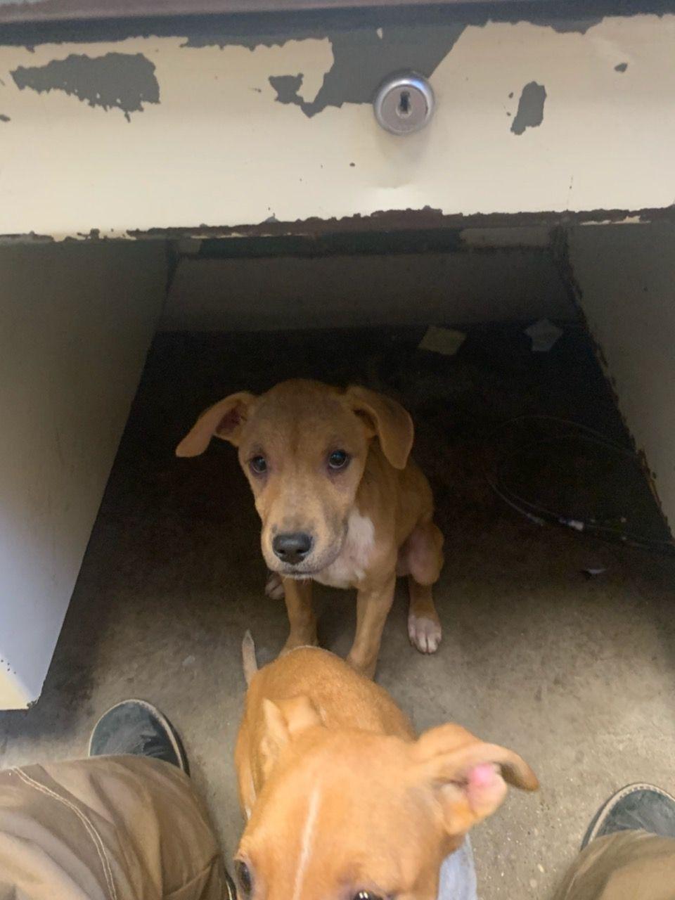 K13 3557 Animal Shelter Dog Adoption