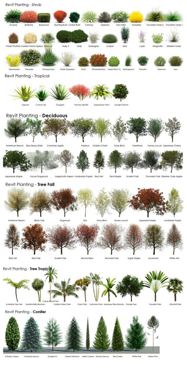 Revit Rpc Tree Guide From A Revit User Front Yard Landscaping