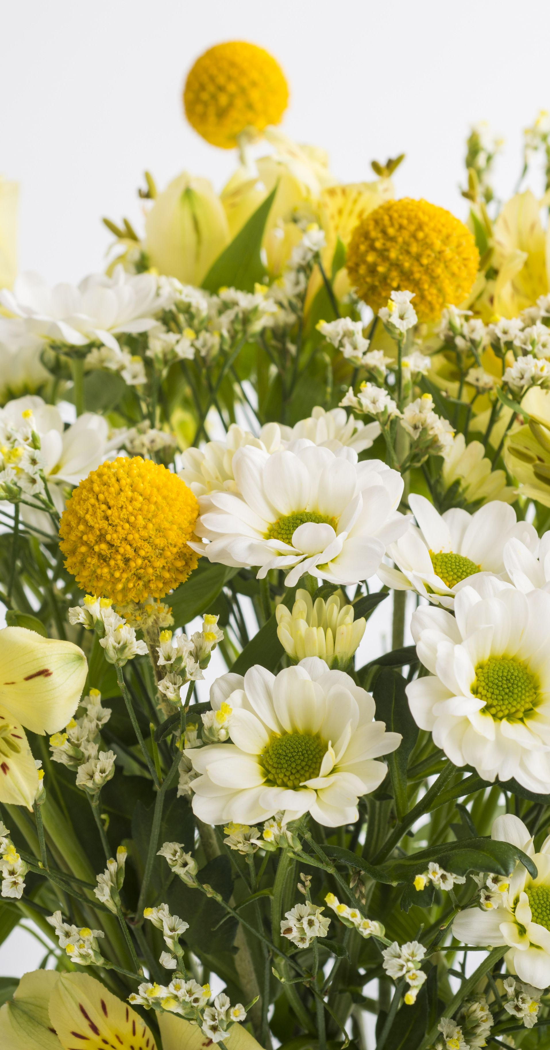 Craspedia Is The Star Of The Show In Our Charlie Bouquet Shop The Charlie For 20 With Free Next Day Letterbox Delivery F Bloom And Wild Flower Delivery Bloom