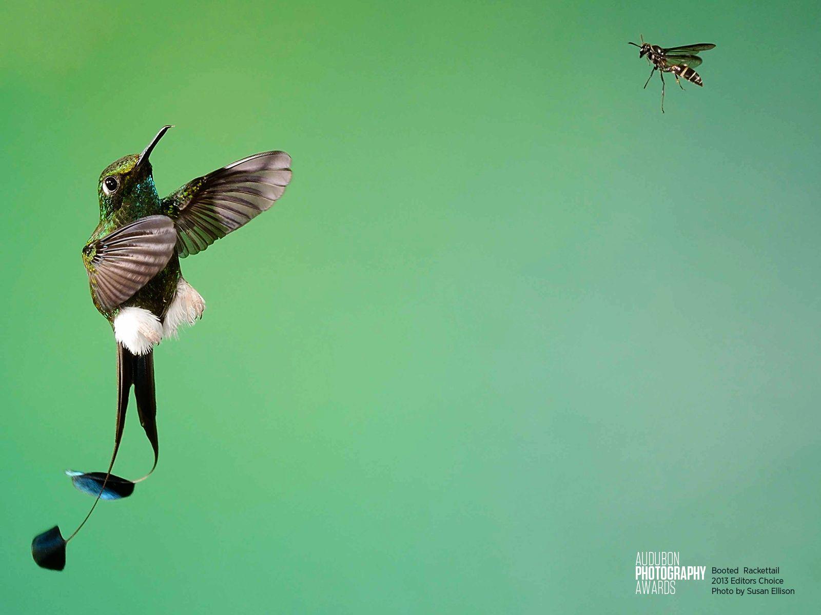 Put a Bird On It | Audubon