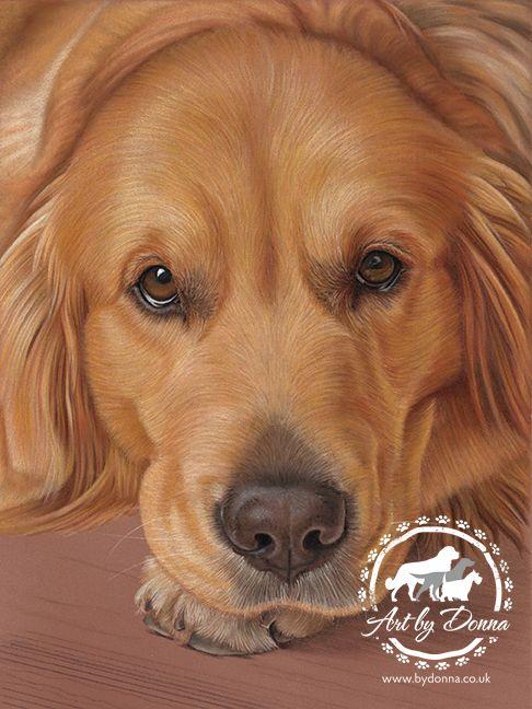 Portrait Of Golden Retriever Dog Drawn By Uk Pet Portrait Artist