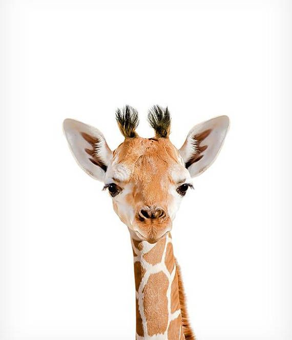 Impression girafe, empreintes d'animaux safari, empreintes