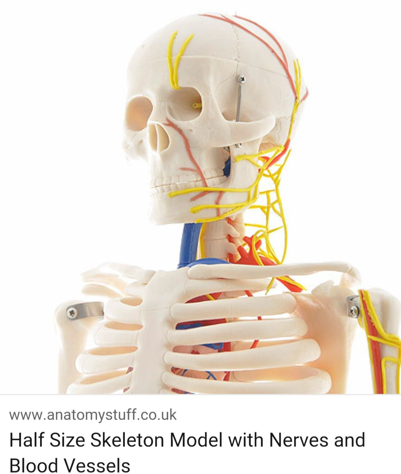 Skull Vessels And Nerves Map Head Neck Anatomy Pinterest Anatomy