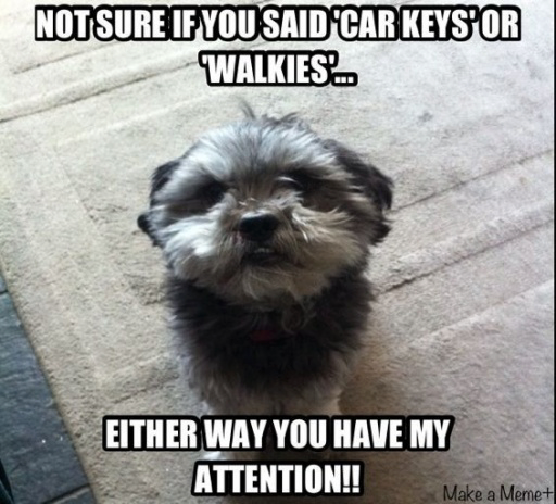 Not Sure If You Said Car Keys Or Walkies Either Way You Have My Attention Funny Animals Animals Shih Tzu