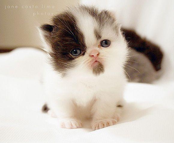 Cute Cat | Cutest Paw