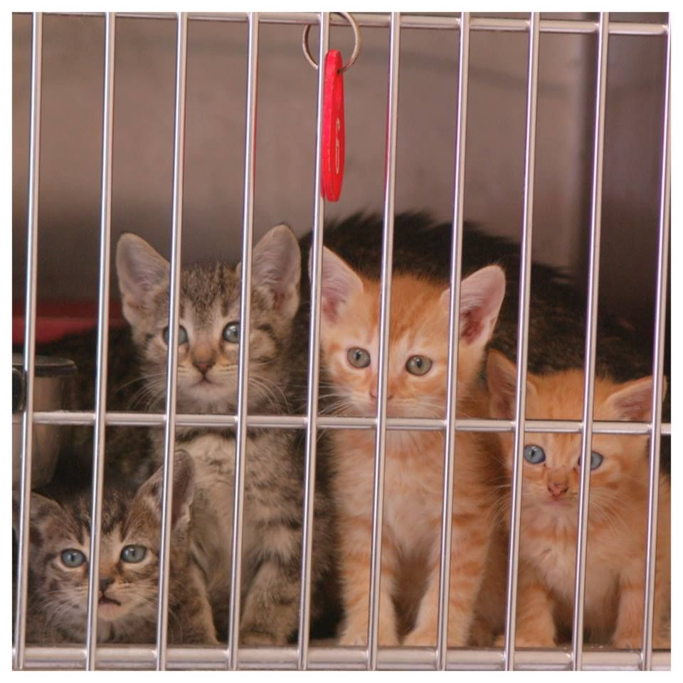 Adoption Rescue Fees 25 Per Animal 25 Mom And Unweaned Puppies Kittens 25 Litter Of 2 Puppi Animal Rescue Stories Kitten Rescue Homeless Pets