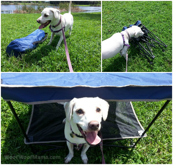 Instant Canopy Pet Bed and Quik Shade for Outdoor Family