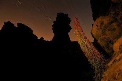 Bugloss at sunset by  Francisco Mingorance