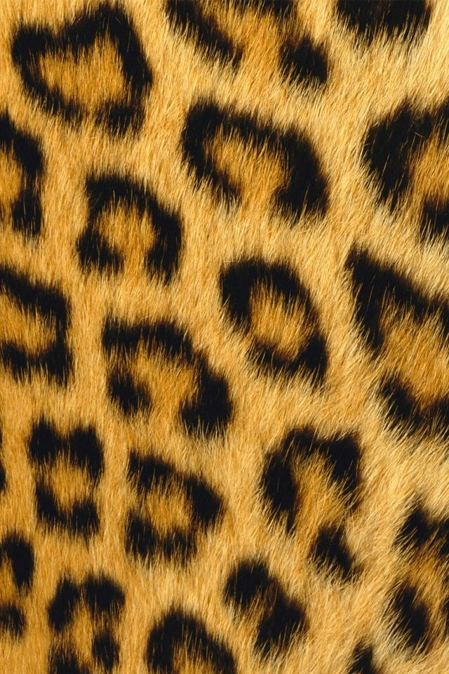 Cheetah Animal Print Wallpaper For Iphone Or Android Fundos De