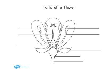Parts of a Plant and Flower Labelling Worksheet | Parts of ...