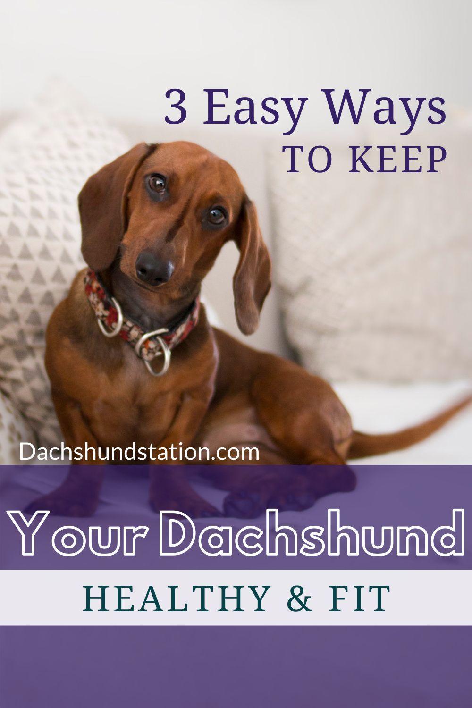 3 Easy Ways To Keep Your Dachshund Healthy Dachshund Station In 2020 Puppy Feeding Schedule Healthy Fitness Dog Feeding Schedule