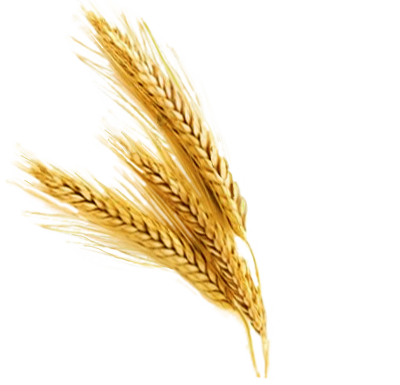 Wheat Stalks PNG | Vintage Western Wedding | Pinterest ...