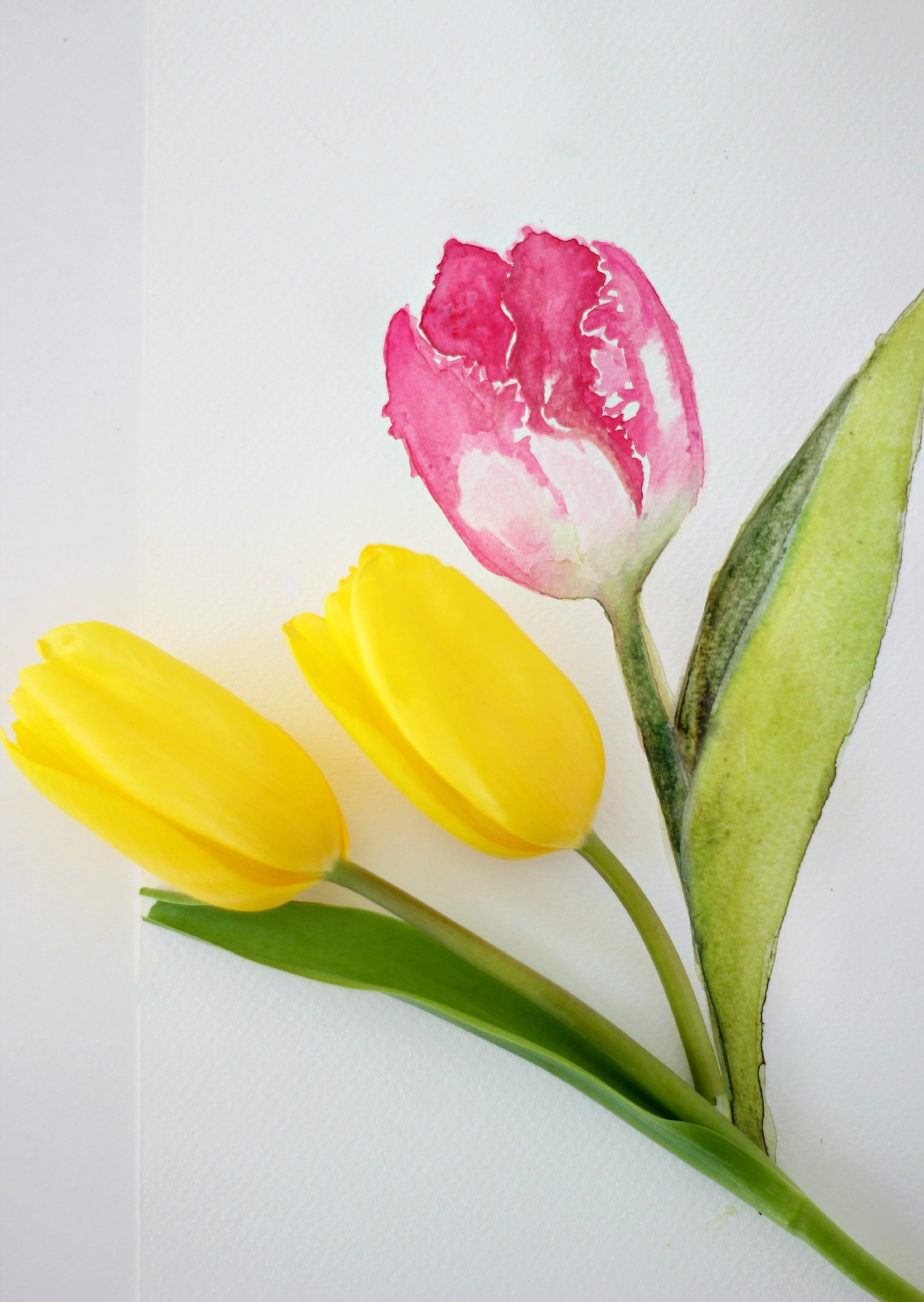 How To Paint A Tulip In Watercolor Watercolor Flowers Tutorial
