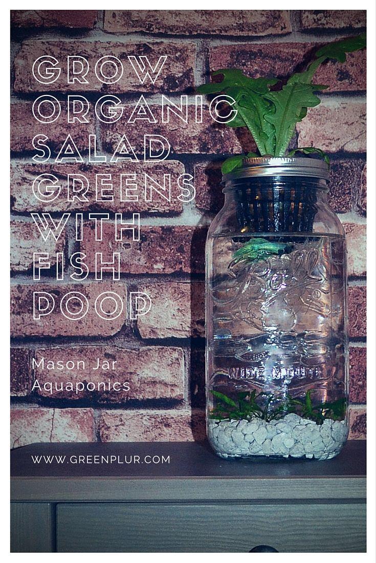 Stylish design for a desktop mason jar aquaponics system grow an
