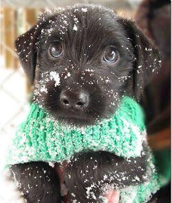 Tiene frio=(