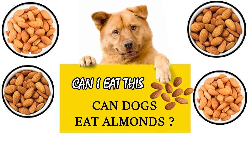 Can Dogs Eat Almonds? Answer and Advice