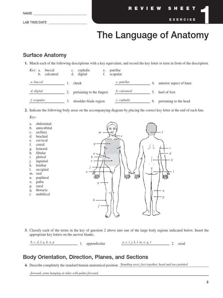 Anatomy And Physiology Coloring Workbook Answer Key Unique Chapter 1 Introduction To Human Anatomy And Physiol Human Body Worksheets Anatomy Wristband Template