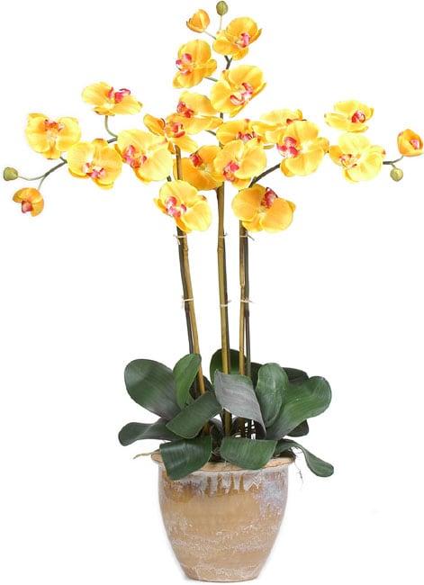 Triple Stem Phalaenopsis Silk Orchid Plant Dark Pink Nearly Natural Orchid Plants Silk Plants Silk Orchids