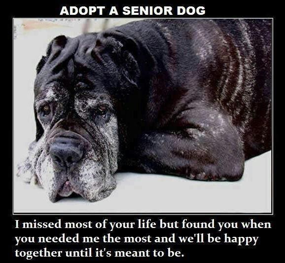 Adopt a senior ♥  Seniors should be able to pass on with dignity and comfort in a home where they are loved. Not in a shelter where they are all alone and confused and scared.