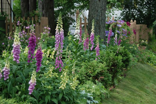 Moglie, Madre, Gardener: Percorso giardino all'ombra ~ April fino a dicembre 2011