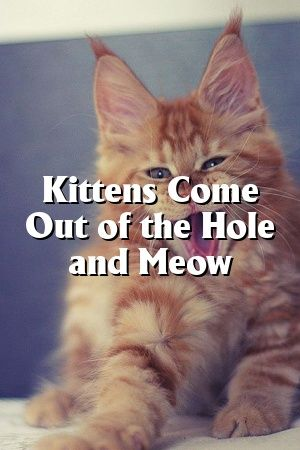 Abigail Ross Tells About Kittens Come Out of the Hole and Meow   #cats  #catlover  #catoftheday  #pet  #Adult  #Kittens  #Cats  #Patterns