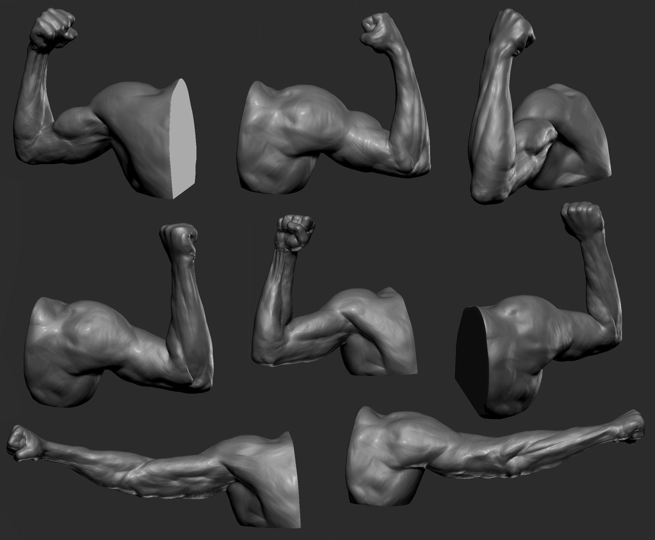 Upper lower arm | Referencias Anatomicas | Pinterest