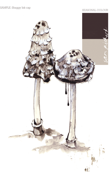 Planet Sam: Colour from the season Shaggy Ink Cap - Black (and ...