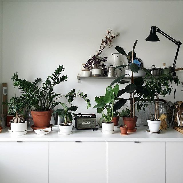 Kitchen Plants Kitchen Plants Plants Indoor Plants
