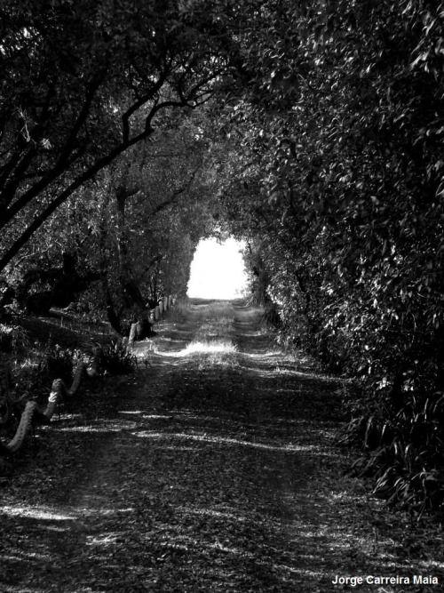 Túnel com luz ao fundo. Salgados, 2014/07/13.