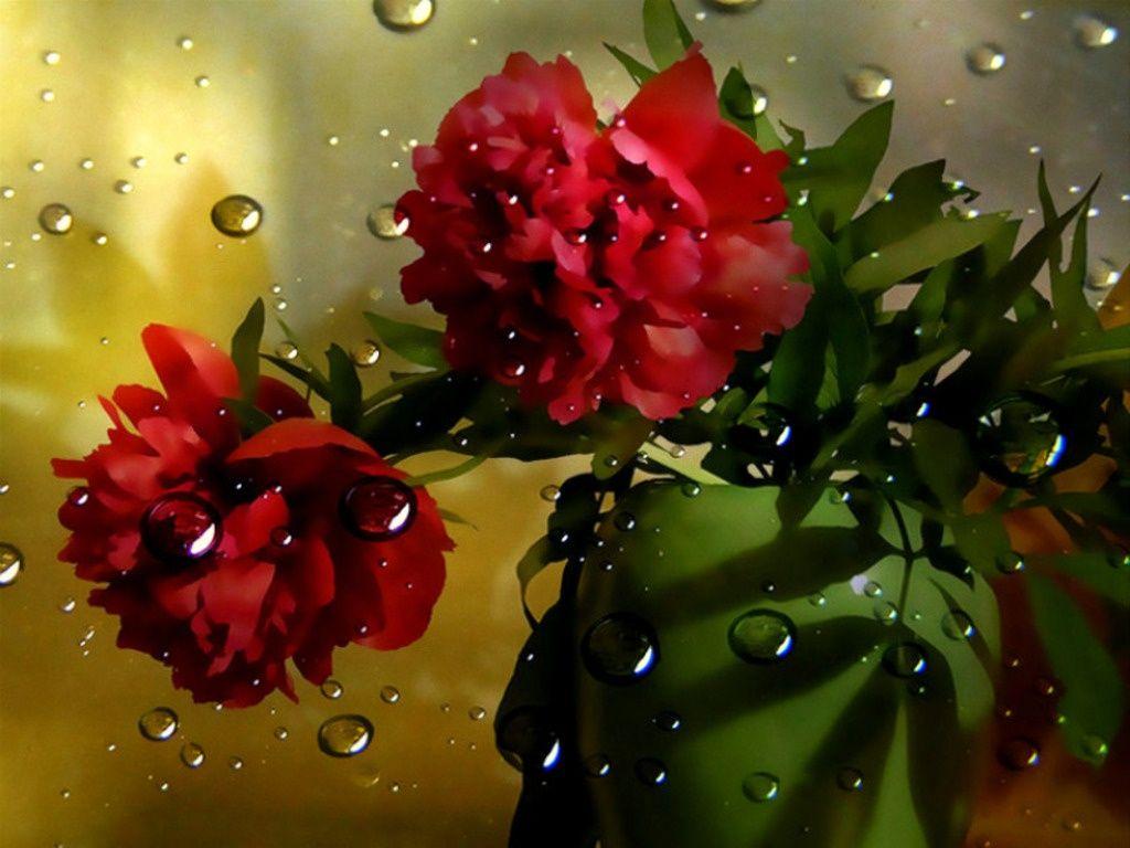 Fantastyczna Kwiaty Darmowe Tapety Na Pulpit 10544 Flowers Red Flowers Red Roses