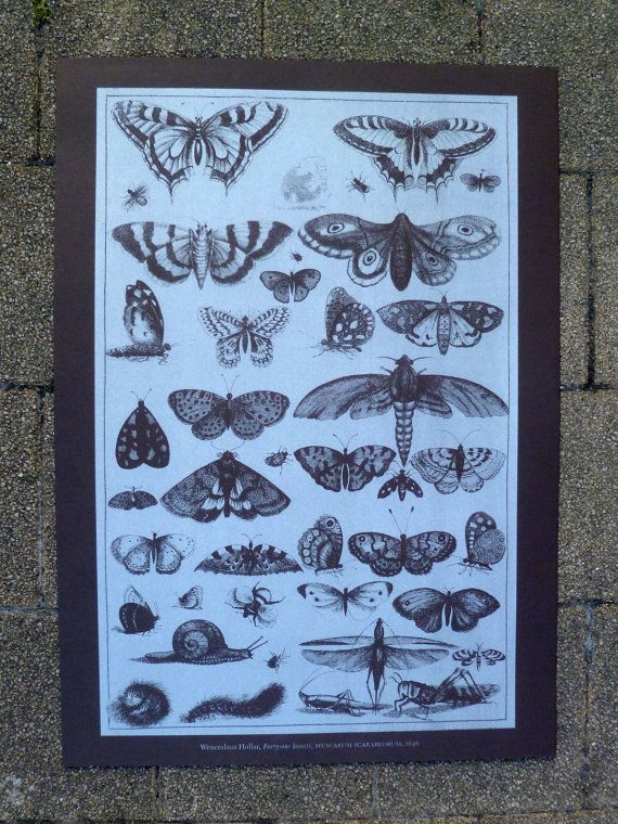 Screen print of Wenceslaus Hollars's '41 Insects'. Heavy brown stock and silver water-based ink. 50 x 70 cm.