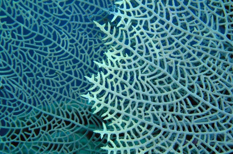 Sea Fan via Coreyfischer.com | Let's Cha Cha Inspiration