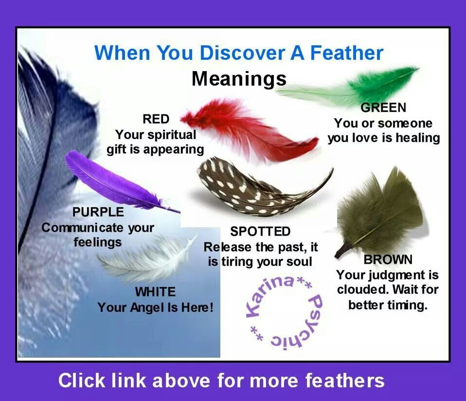Meaning Of Feathers You Find Feather Meaning Finding Feathers