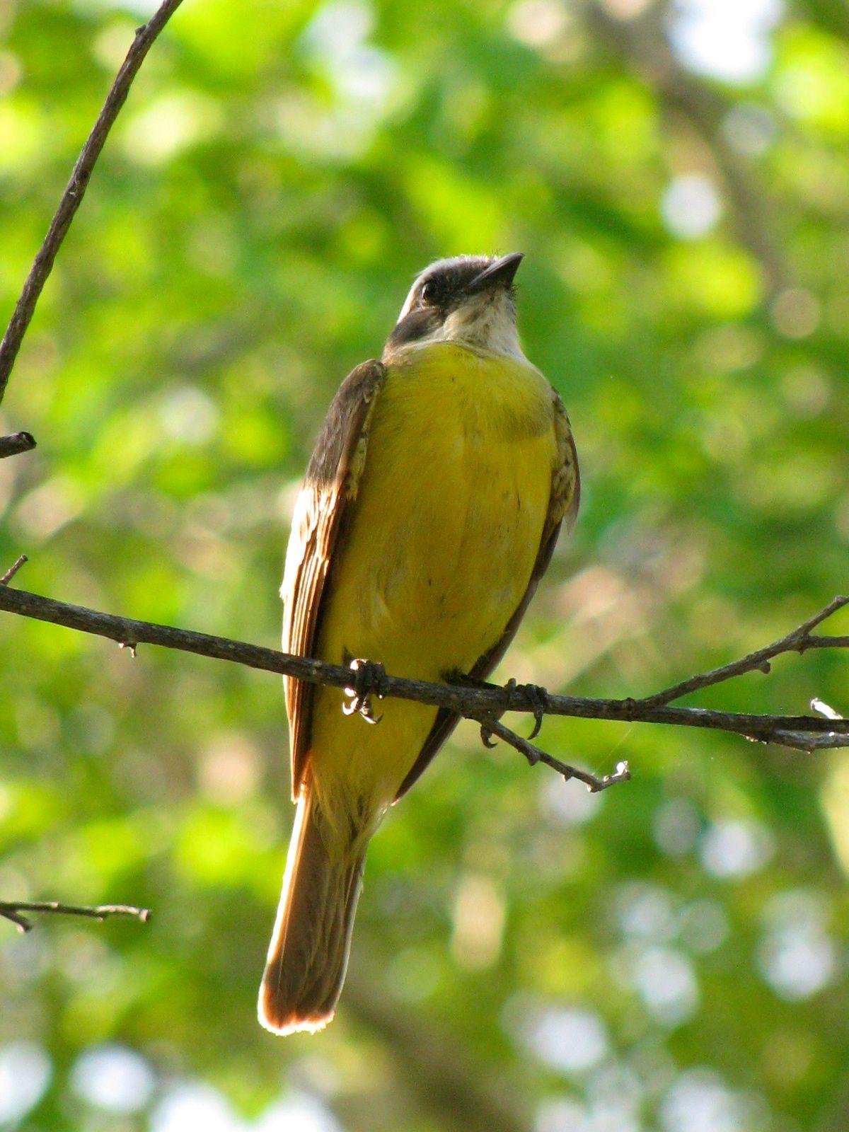 Increíble Pájaros Enojados Para Colorear Libros Patrón - Ideas Para ...