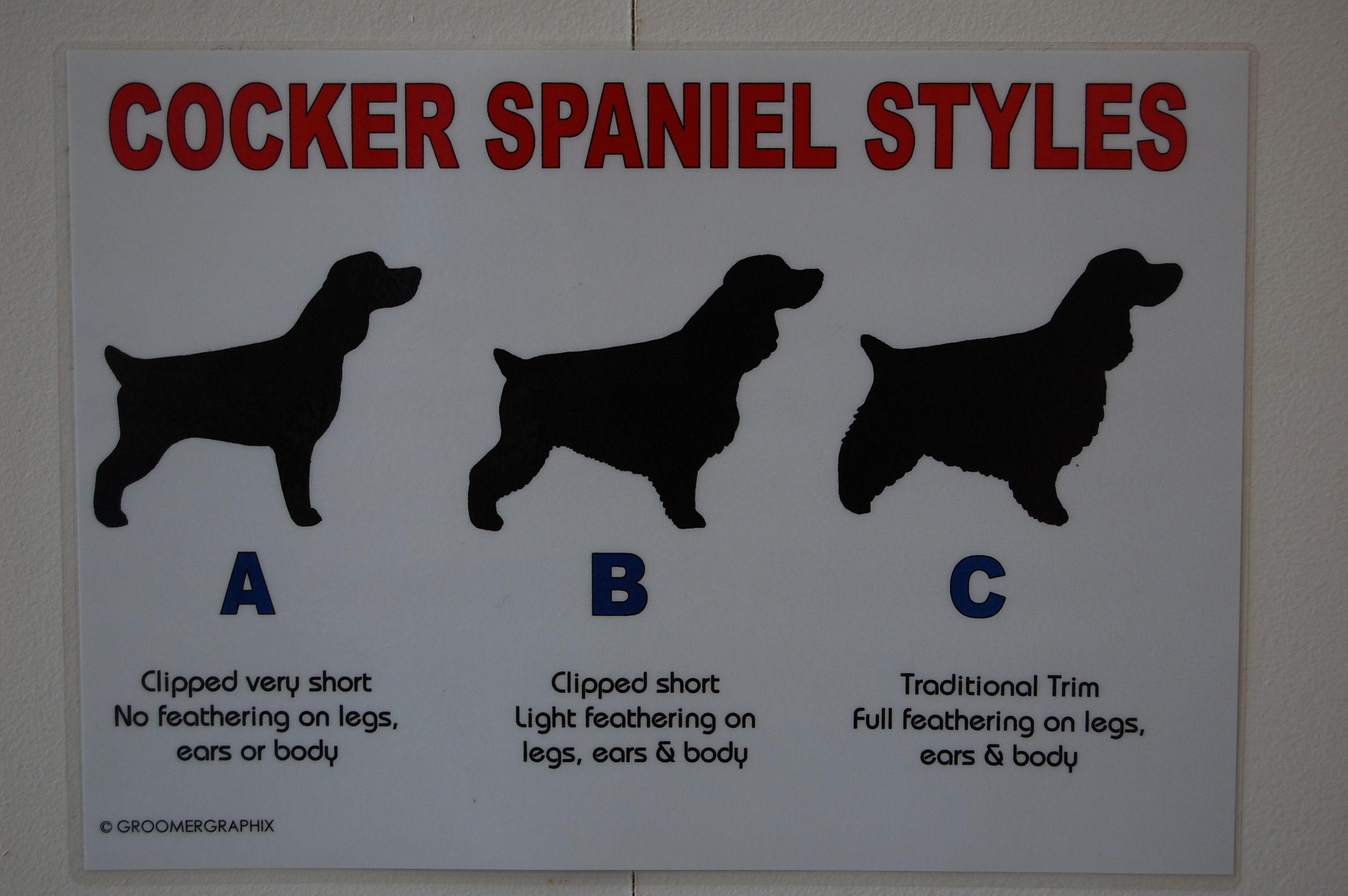 Posh Paws Dog Grooming Salon Cocker Spaniel Grooming Dog Grooming Salons Cleaning Dogs Ears