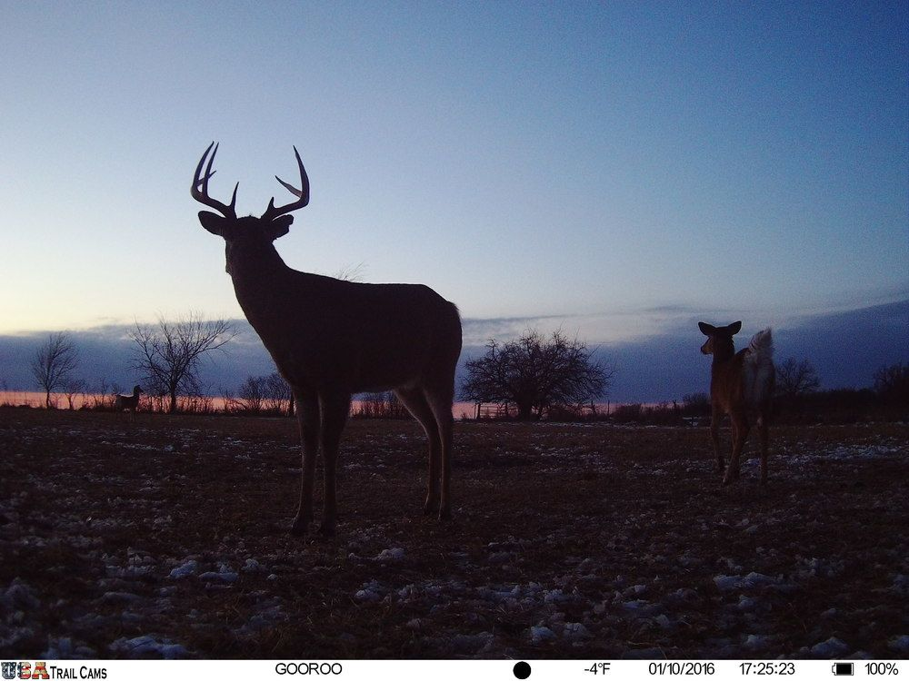 Source: USA Trail Cams