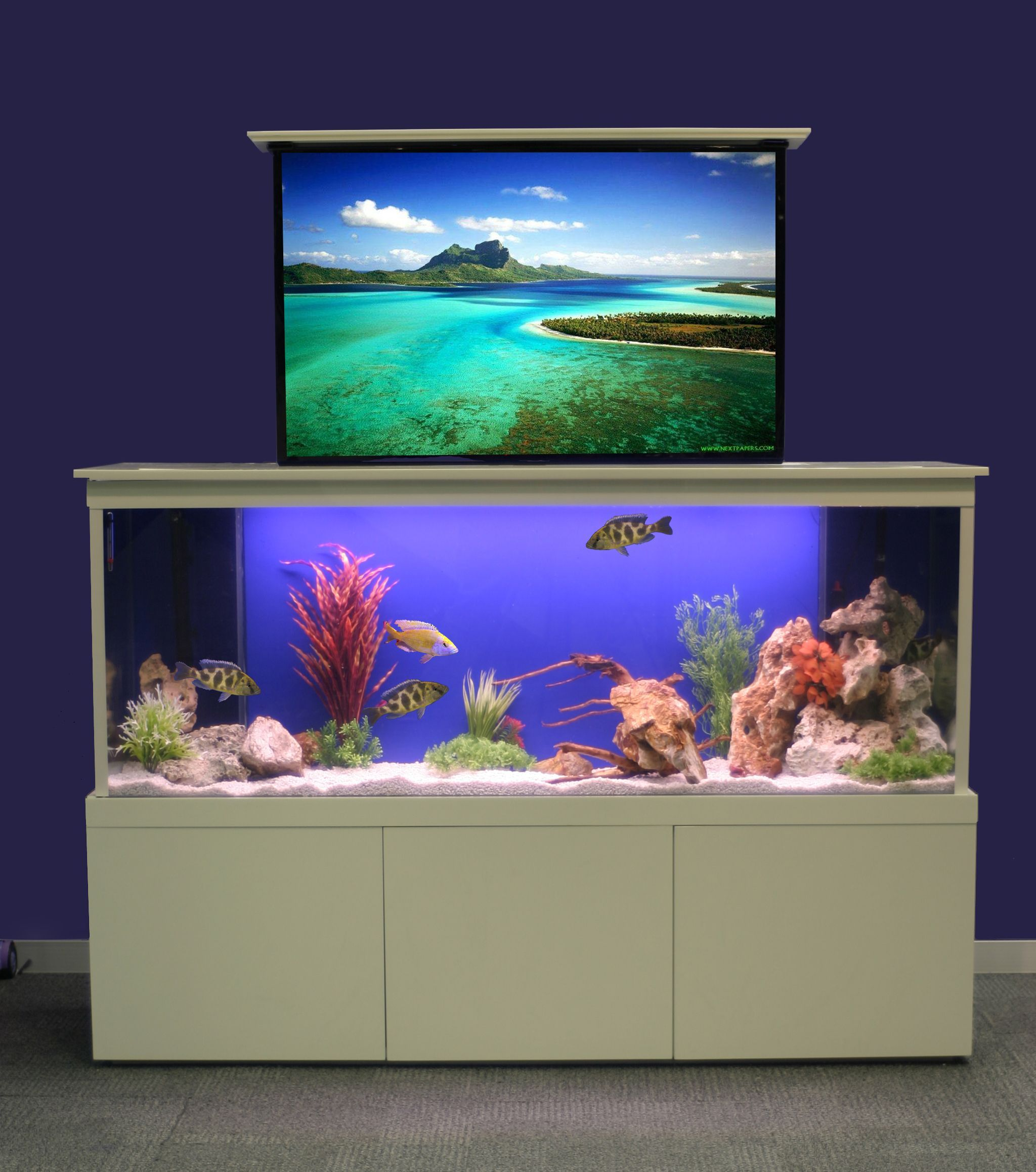Elegant How To Design Aquarium In Home Photo Part 20