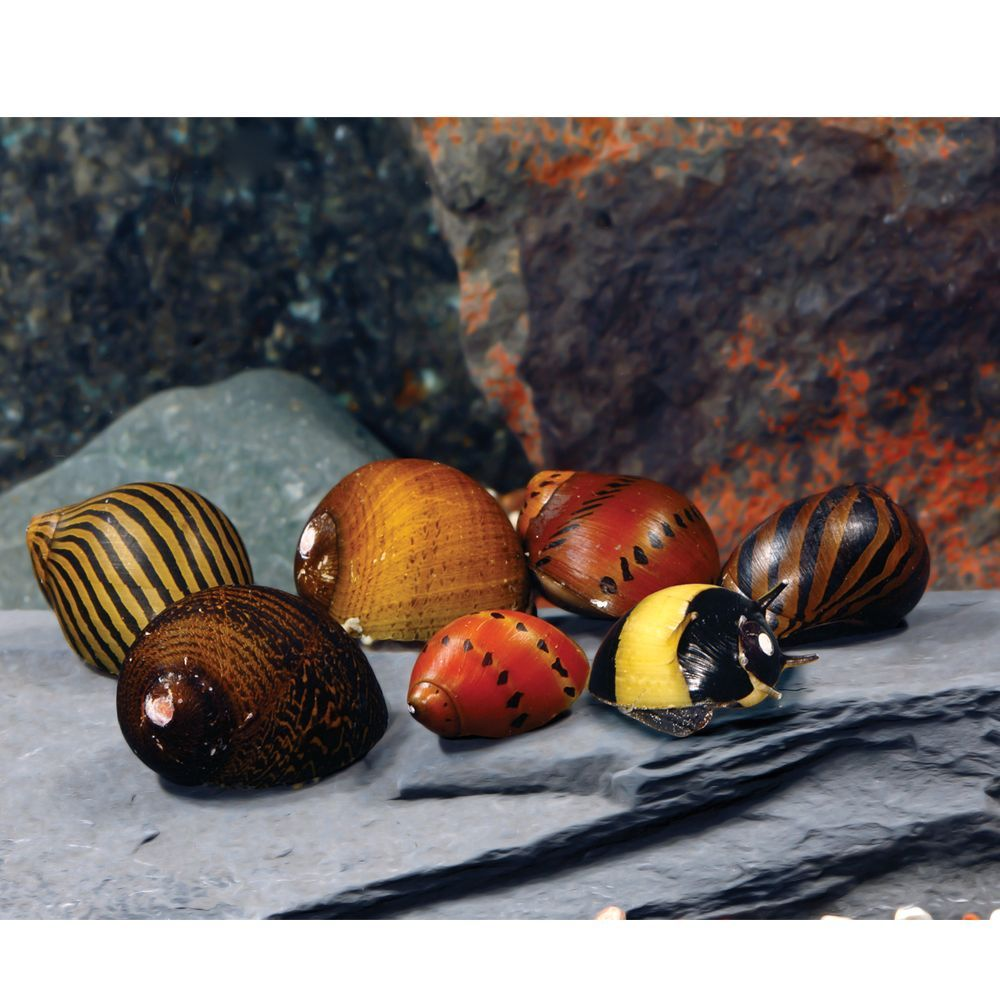 Mixed Nerite Snail Snail, Aquarium snails, Freshwater fish