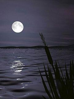 Beautiful Nature Night Scenery Below The Moon Cellphonewallpapers Us Night Scenery Beautiful Nature Scenery