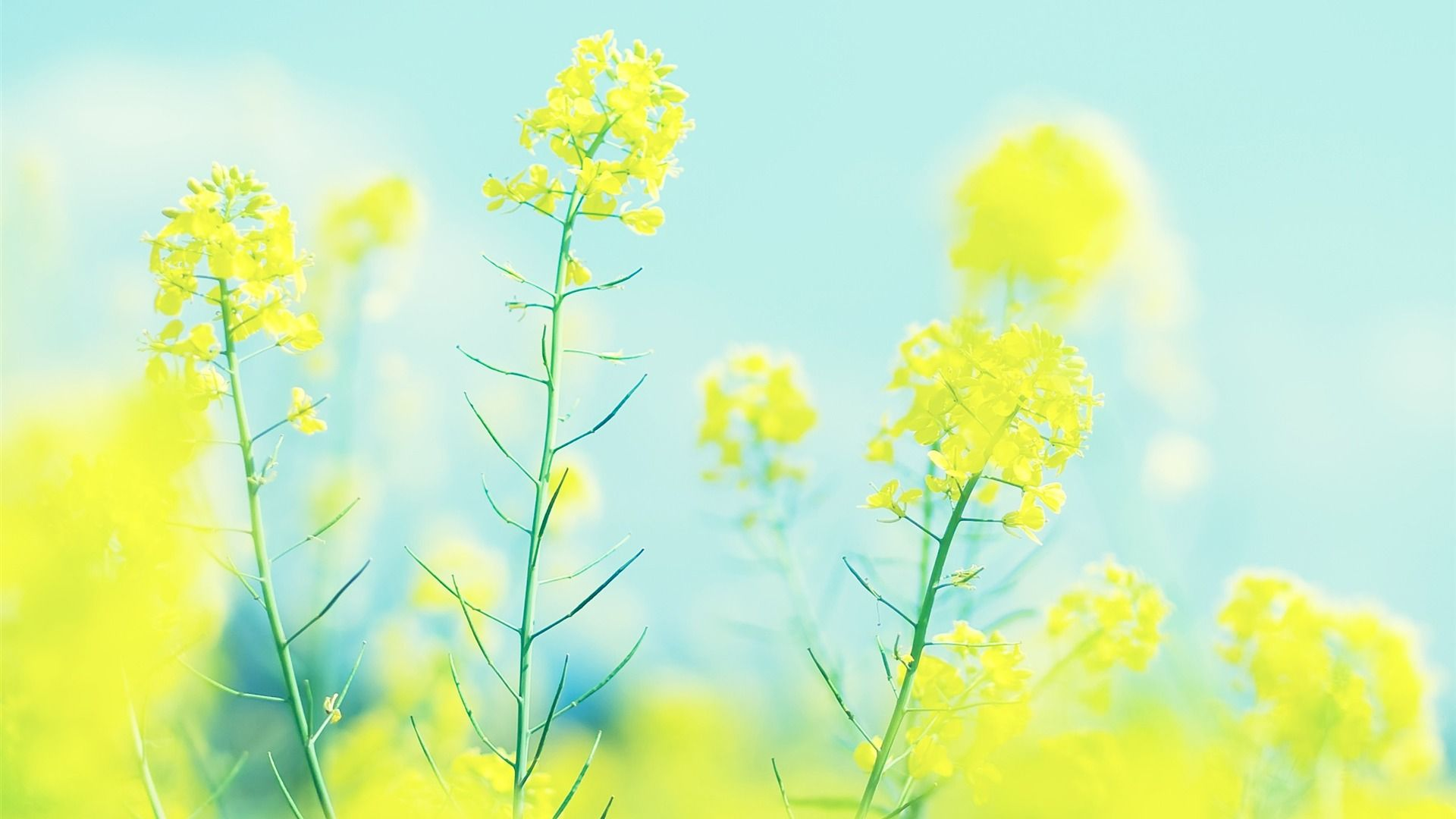 Bright Wallpaper Hd Wallpapers Backgrounds Of Your Choice Bright Wallpaper Yellow Wallpaper Yellow Flowers
