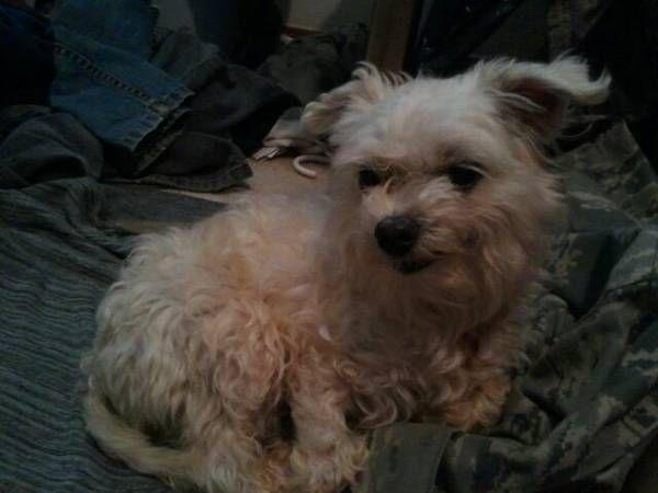 Pin by Julie Klem on Tornado's Lost Pets Losing a pet