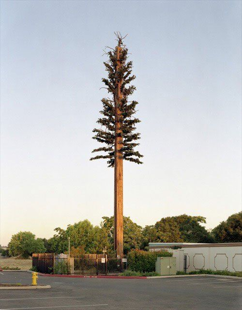 cell phone tower disguised as a tree (9) | Telephone pole ...