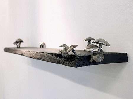 fungi shelf! <3